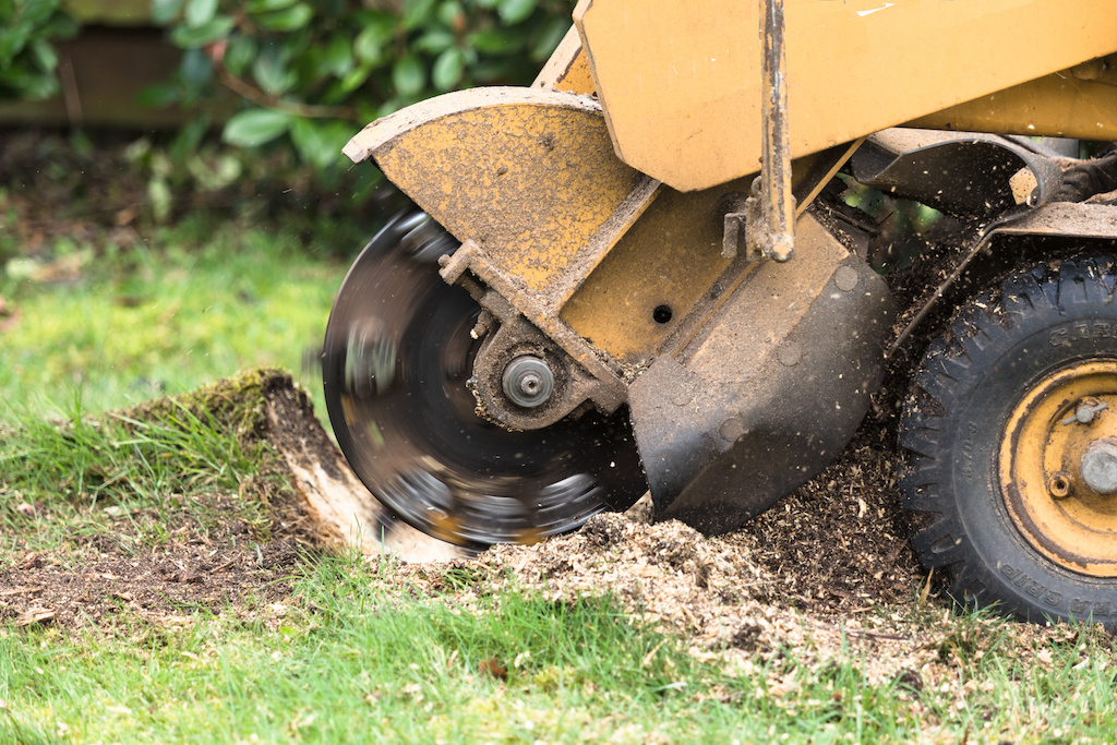 Is Your Yard Ready For A Stump Grinder?
